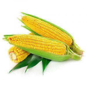 Kukuruz šećerac
